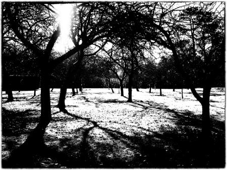 December 7 - Winter Light