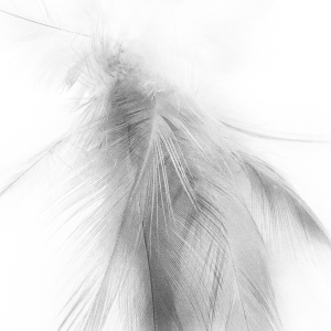 March 29 - Feathers