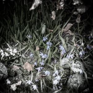 April 9 - Spring