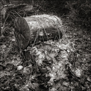 Log and undergrowth