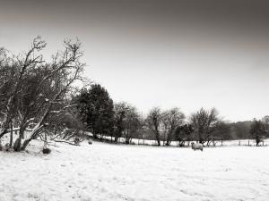 Stoneleigh - January 2013