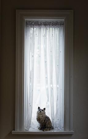 'W' IS FOR WINDOW