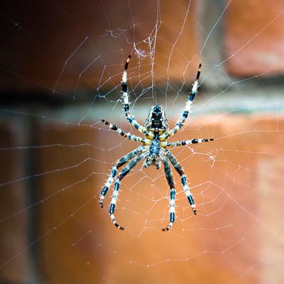 spider-00002