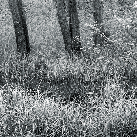 wood_packwood-29753