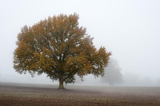autumn_fog-31921