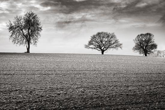 berkswell_trees-32718