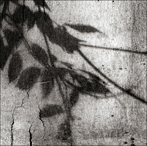 Shadows of Growth