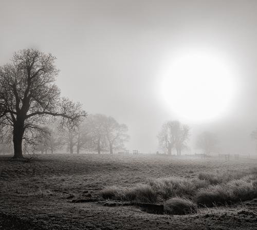 winter-fog-36632
