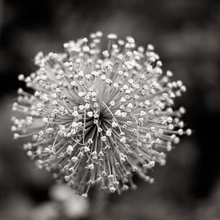 constellation-30994